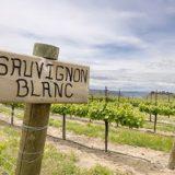 Il Sauvignon Blanc. Selvaggio ed elegante.